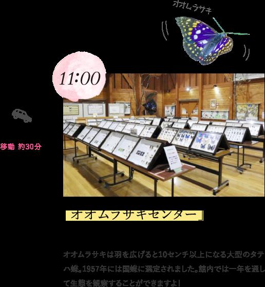 11:00 「オオムラサキセンター」で国蝶を観察! オオムラサキは羽を広げると10センチ以上になる大型のタテハ蝶。1957年には国蝶に選定されました。館内では一年を通して生態を観察することができますよ!