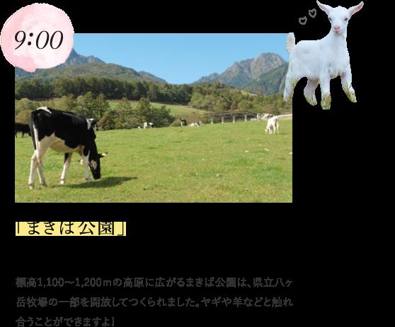 9:00 「まきば公園」でヤギや羊とのふれあい! 標高1,100~1,200mの高原に広がるまきば公園は、県立八ヶ岳牧場の一部を開放してつくられました。ヤギや羊などと触れ合うことができますよ!