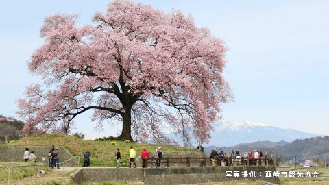 写真提供:韮崎市観光協会