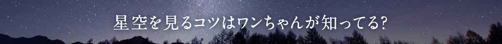 星空を見るコツはワンちゃんが知ってる?