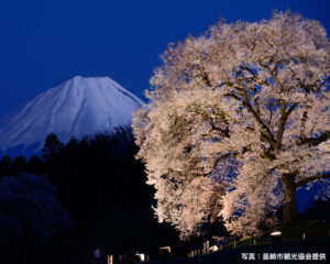 八ヶ岳などをバックに咲く一本桜「わに塚のサクラ」、ライトアップは今週3月29日から!