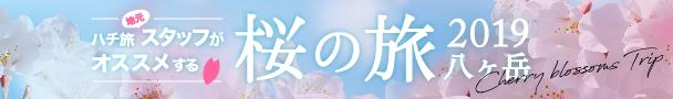八ヶ岳 桜特集2019