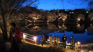 夜桜を見ながら地元のお酒で乾杯! 長坂湖の「北杜夜桜まつり」は4月13日