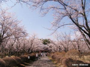 """""""本州で最後に咲く""""蓼科山聖光寺の桜が開花! ライトアップもスタートしました"""