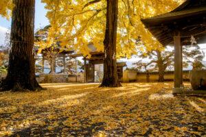 イチョウやモミジが彩るお寺の秋! 「諏訪紅葉 三山めぐり」で限定御朱印やライトアップも
