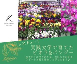 八ヶ岳で育ったお花を救おう! デリ&カフェ「K」で利用者にビオラ&パンジーをプレゼント中